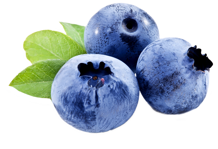 Blueberry Png Related Keywords & Suggestions - Blueberry ...